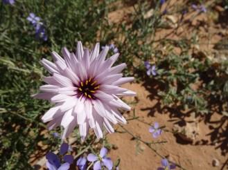 marocco2015_065
