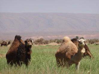 marocco2015_138