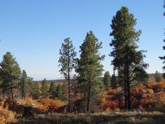 ... und Nadelbäume in den höheren Gebieten