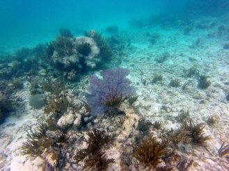 Auch daneben gab es eine tole Unterwasserwelt