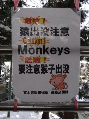 Leider waren keine Affen vor Ort