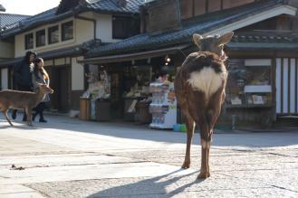Japan_2_011