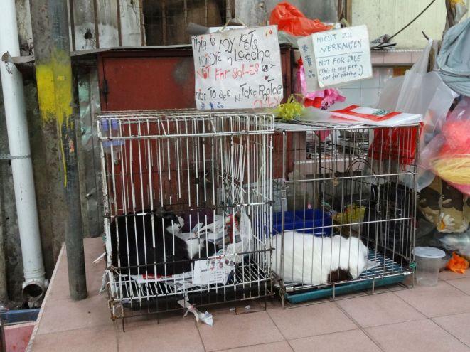 Katze nicht zum Verzehr