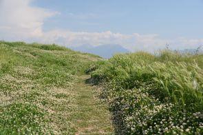 Der Weg hinauf zu den Ruinen von Hierapolis