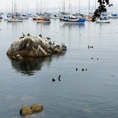 Touring the Monterey Coast (or two long runs)