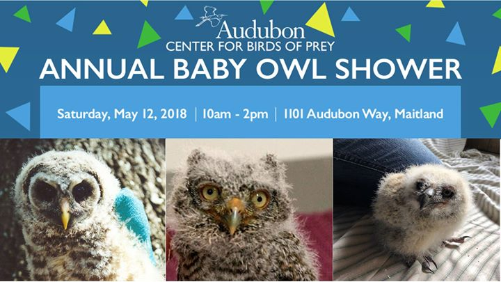 Each Year Audubon Center For Birds Of Prey Hosts The Baby Owl Shower To  Help Support Clinical Programs During Our Busiest Season.