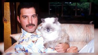 Ferocious 5: Top 5 Cat Daddies