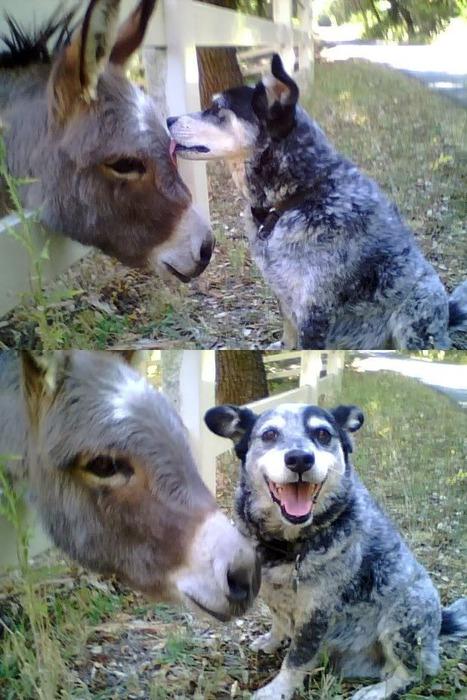 Dog Lick_SSfK 090814