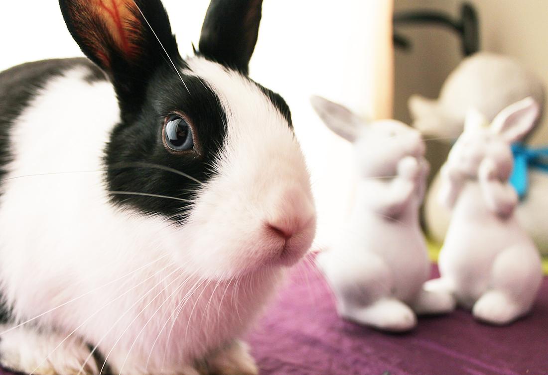Bunny Pregnancy & Kits