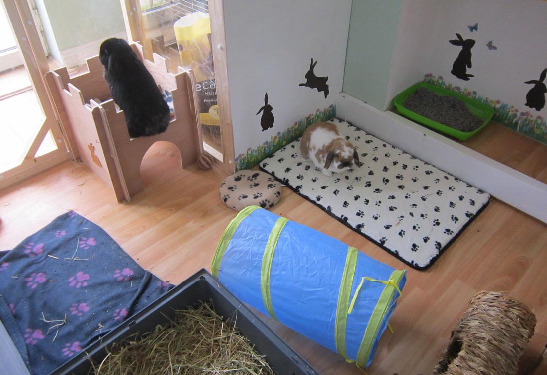 Indoor Buns