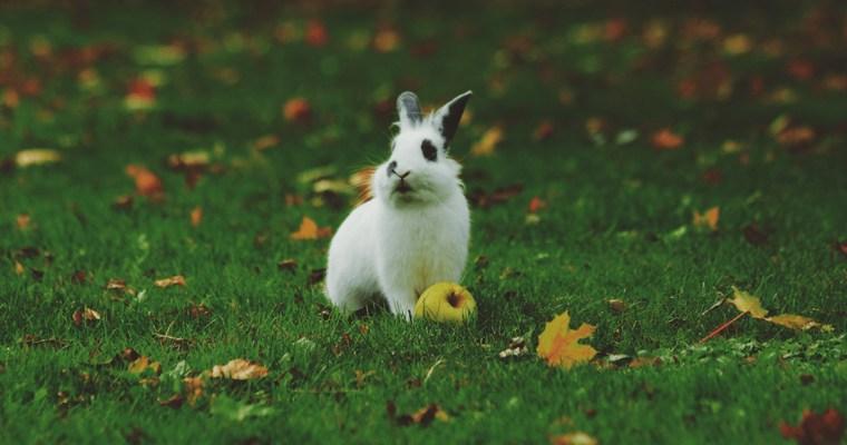 Bunny Basics