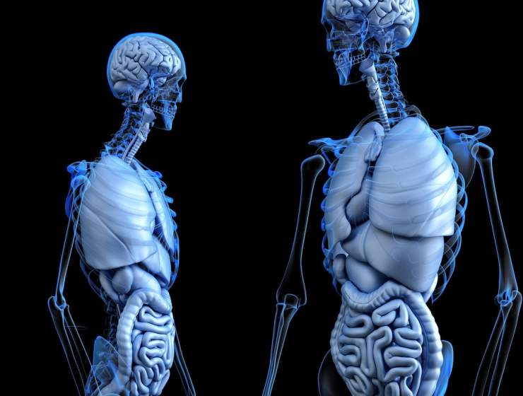 Yoga For Your Internal Organs