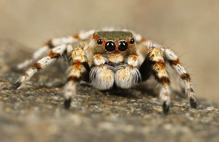 Spider Venom Cleanse