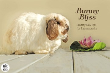 tofu-bunny-bliss1