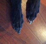 Wet paws...