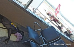 02-20161126_115539lucydeparture