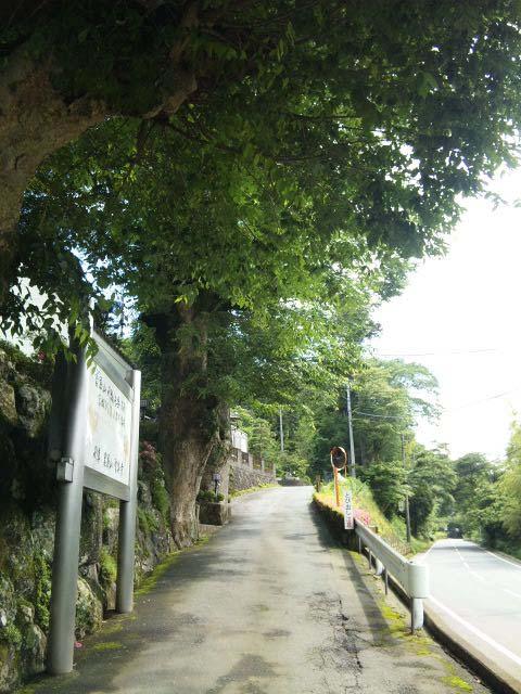 聖尊寺入り口