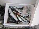 大漁のアジとサバ