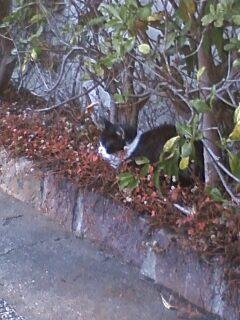 カーブの猫1
