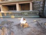 材木座の光明寺にて
