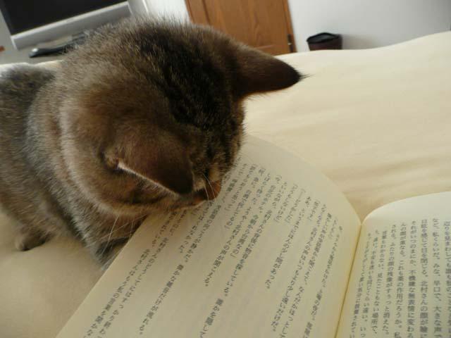 読書の邪魔3