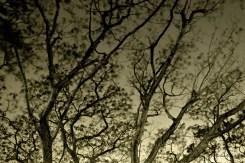 Tree Branches, Park, Paranaque