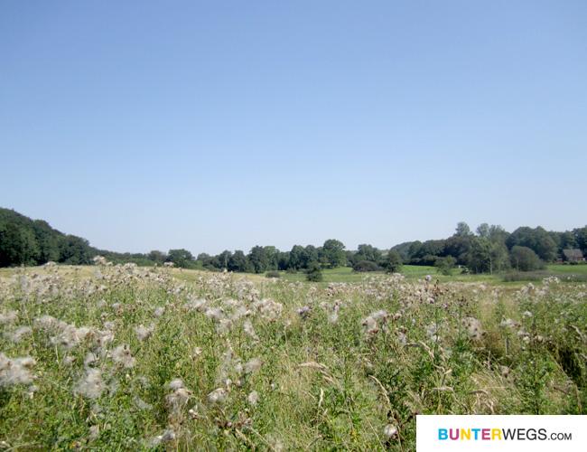 In Padborg startet es recht grün * BUNTERwegs.com