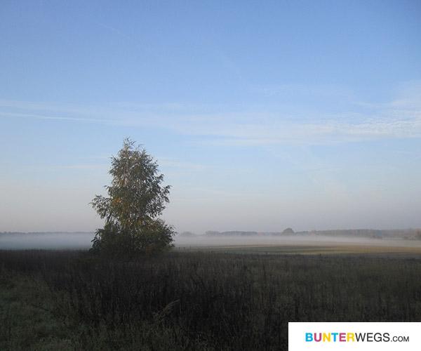 Wenn der Nebel morgens noch auf den Feldern liegt <3