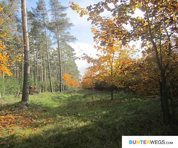 Wälderpracht * BUNTERwegs.com