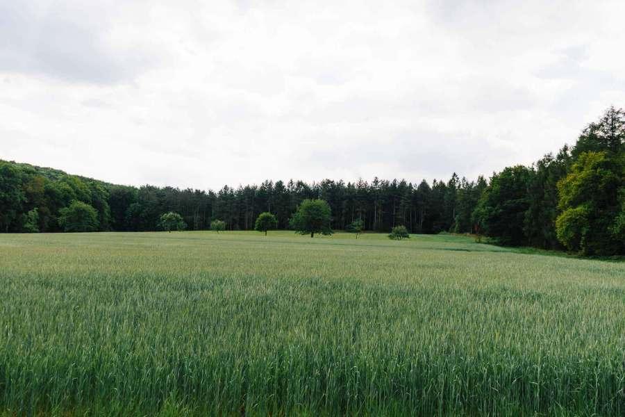 Ein Feld umgeben von Wald