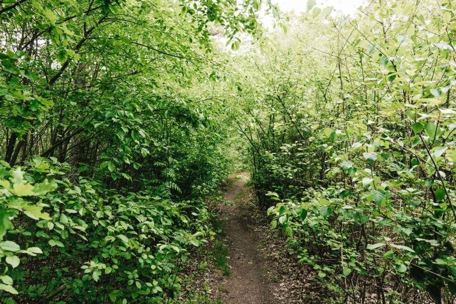 Waldstück mit kleinem Pfad