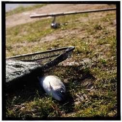 Fishing Pond 3
