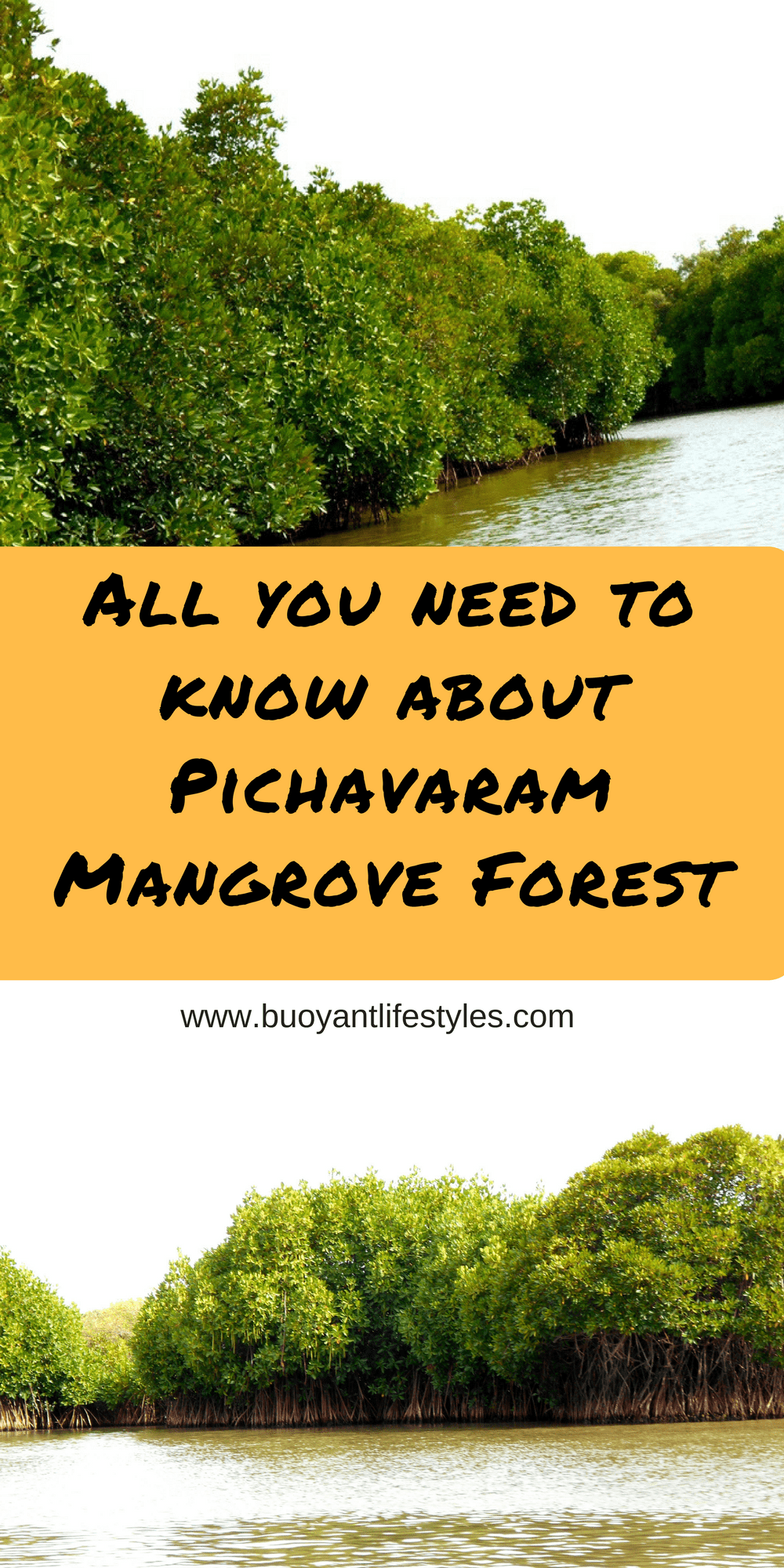 All you need to know about Pichavaram Mangrove Forest