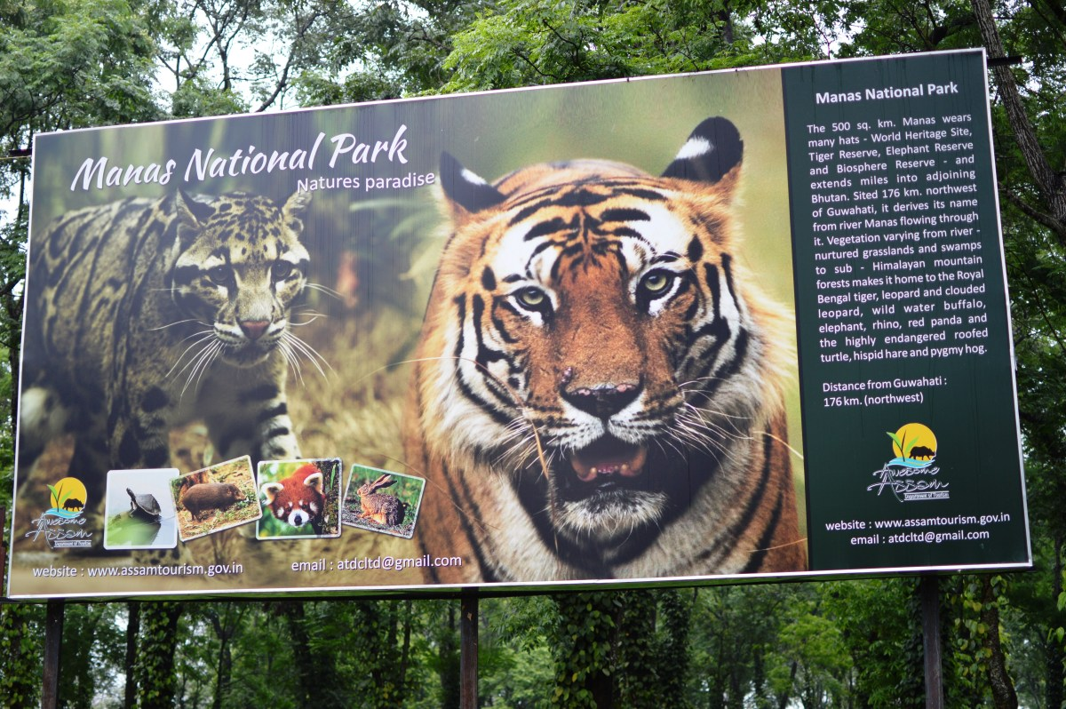 Ultimate Guide to Manas National Park- Part-I