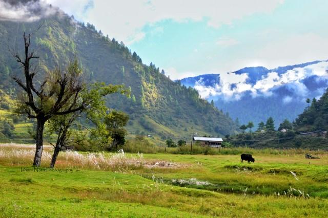#tawang #travelblog #traveldiaries #Arunachalpradesh #SangtiValley