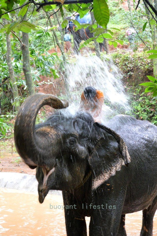 #elephantshower #kerela #munnar