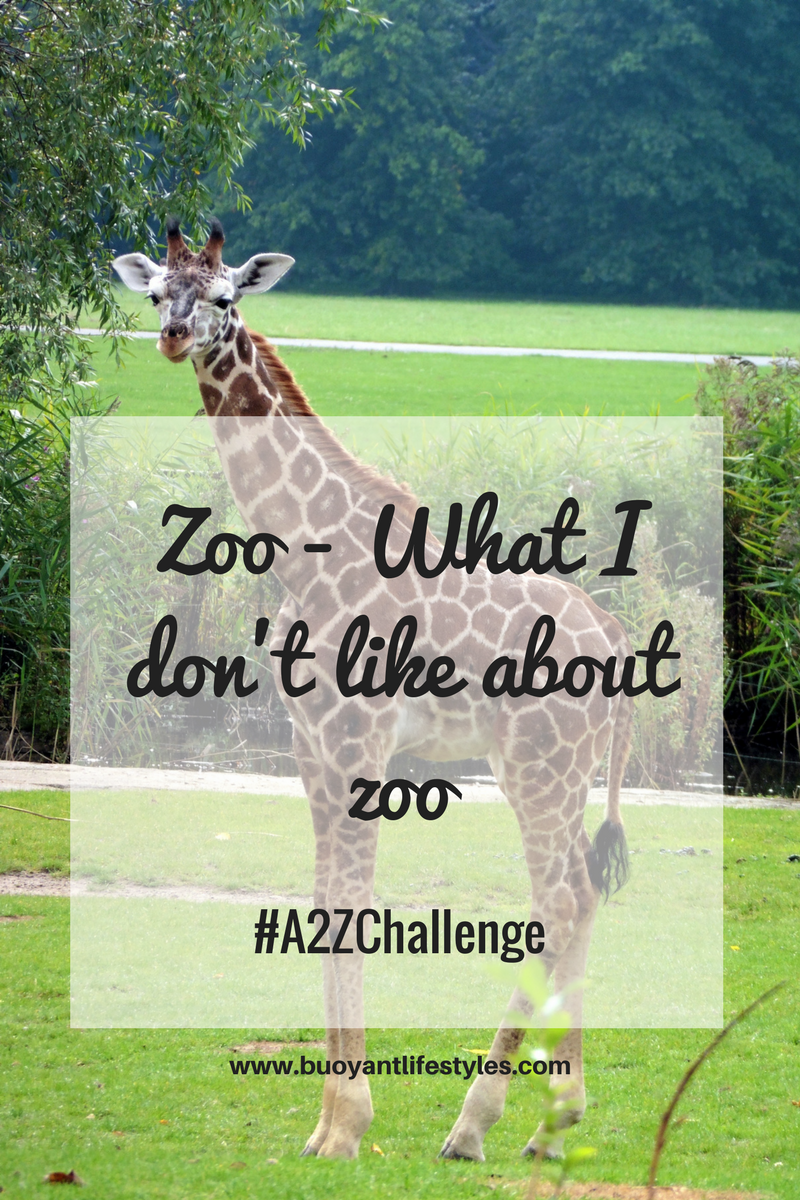 Zoo- What I don't like about zoo