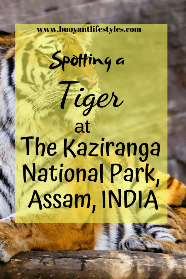 #kaziranganationalpark #assam #nationalpark #northeast #awesomeassam