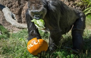 Enjoy The 'Boo At The Zoo' This October