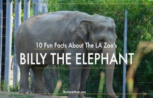 10 Fun Facts About The Los Angeles Zoo's, Billy The Elephant