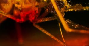 Gates & Military Funded Mosquito Vaccine Delivery + Gates Backed Company To Release GM Mosquitoes