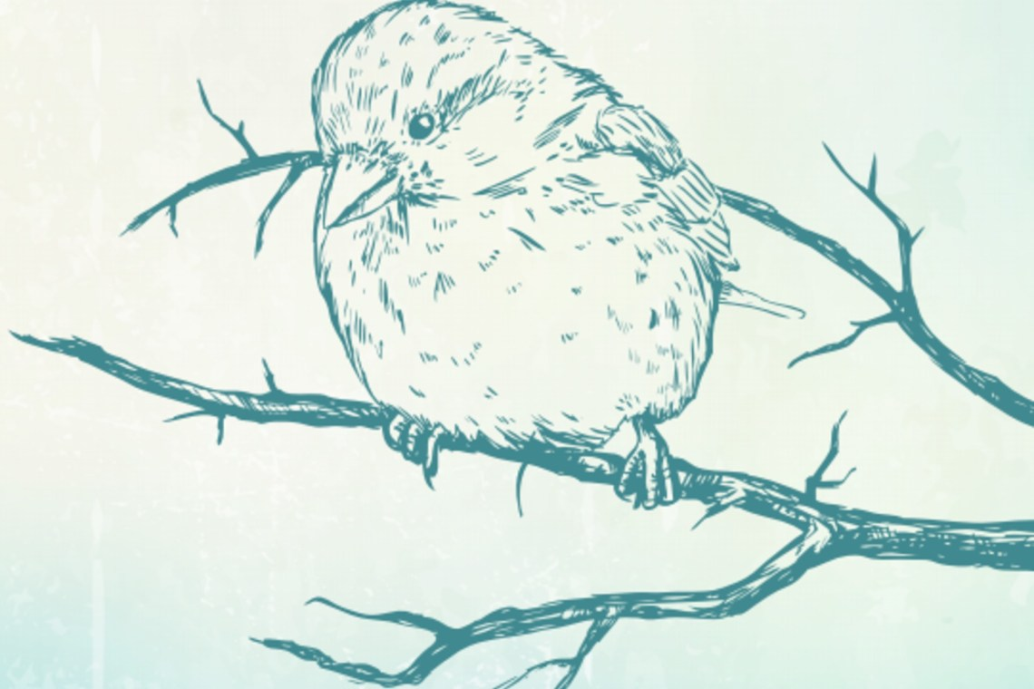 An outline drawing of a sparrow on a branch, in front of a textured yellow & teal background.