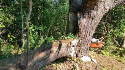 pine and wheel barrow