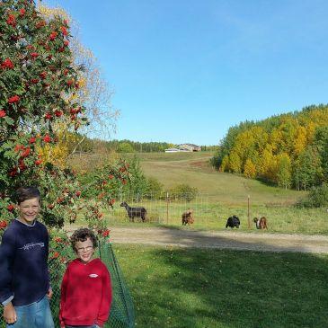 Alberta Farm Tour