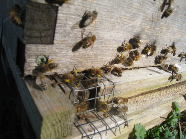 Bees in B.C.