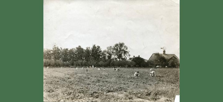 Berry pickers working the W. F. W. Fisher Farm, ca 1902