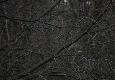Juvenile black-crowned night-heron at Col Sam Smith Park in Toronto, Ontario