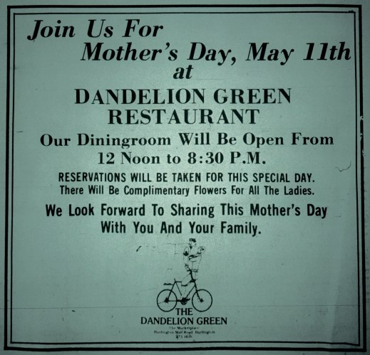 Dandelion Green, Burlington MA