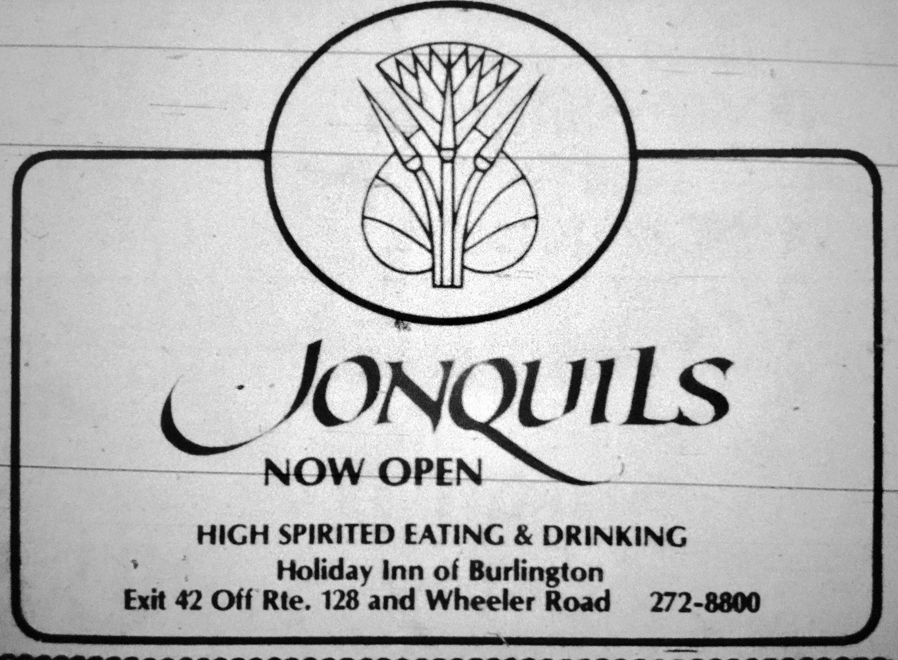 Jonquils, Holiday Inn, Burlington MA