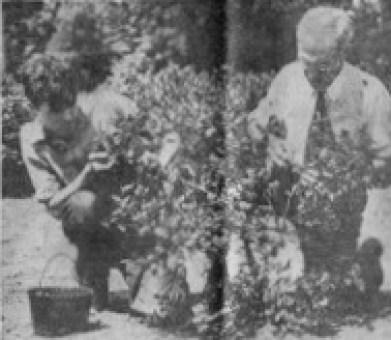 John (left) and Ernst Makechnie, Burlington MA